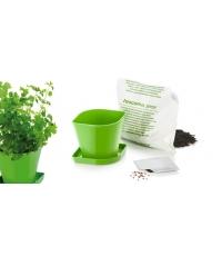 Souprava pro pěstování bylinek SENSE, koriandr